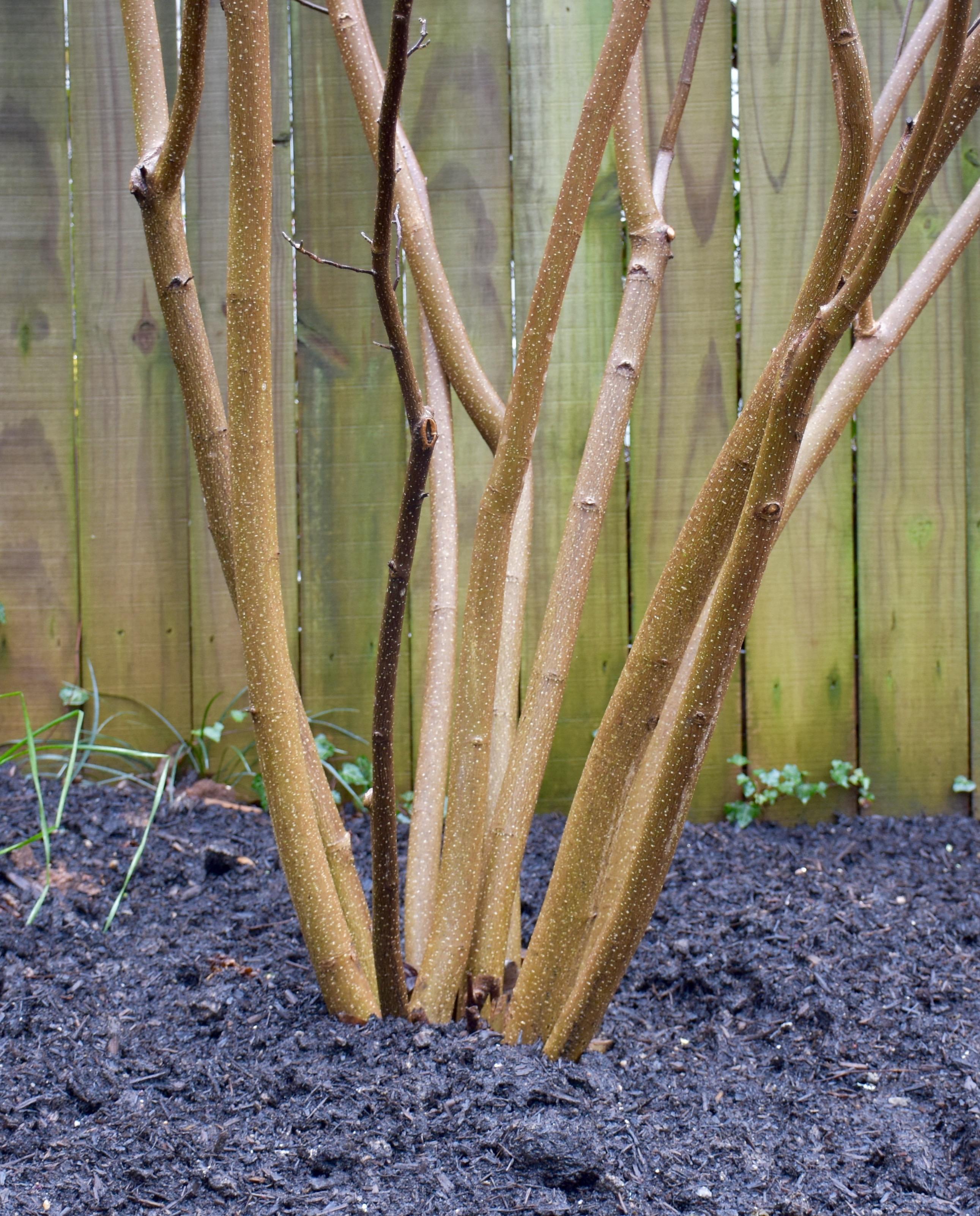 Winter Pruning Tips