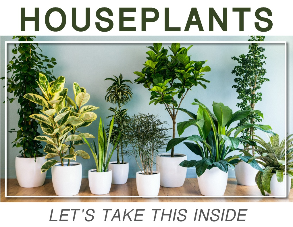 Houseplants18_pic