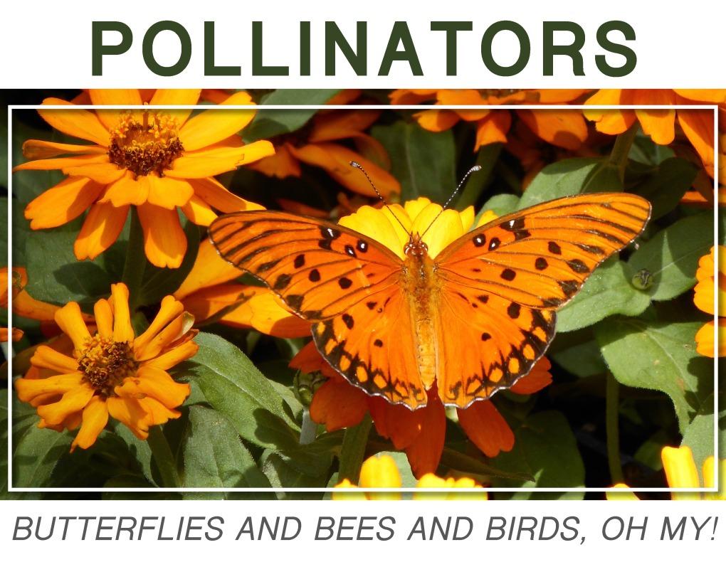 Pollinators18 (1)