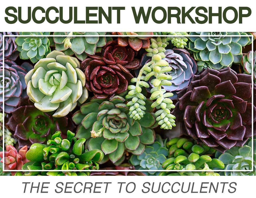 Succulents18 (1)