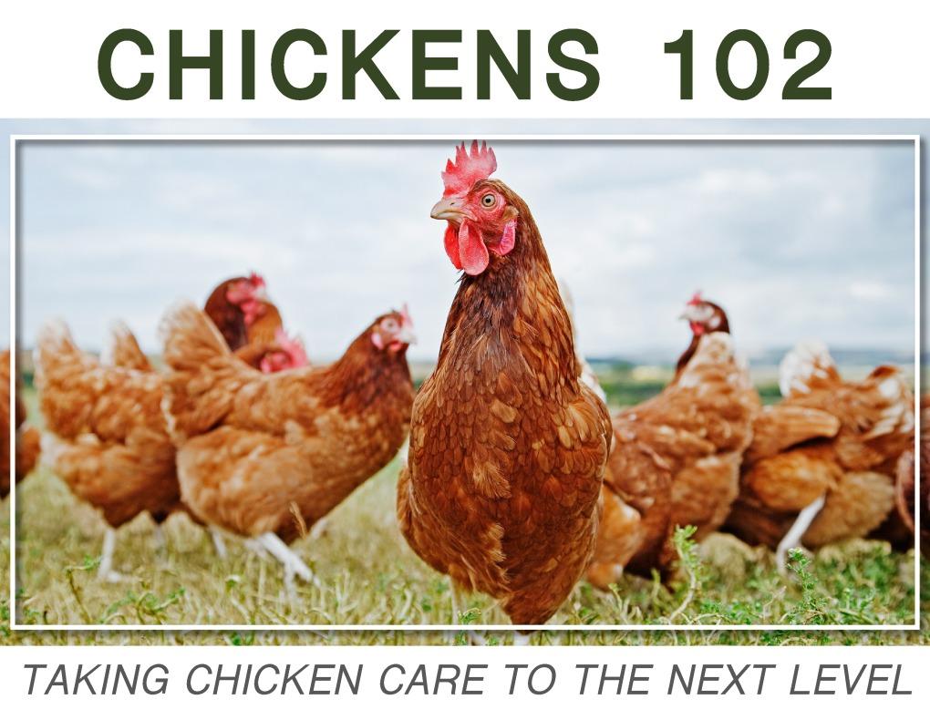 Chick102_18