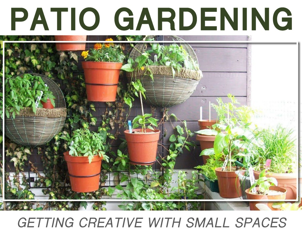 PatioGardening18